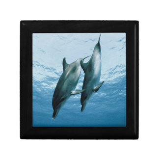 Pair of Dolphins Jewelry Box