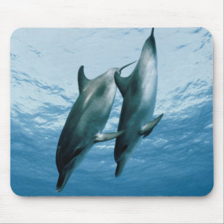 Pair of Dolphins Mouse Pad