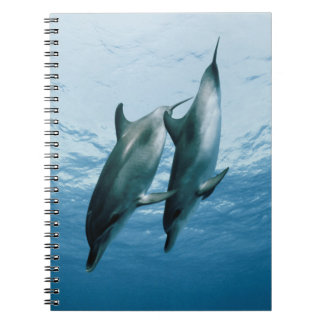Pair of Dolphins Spiral Note Books