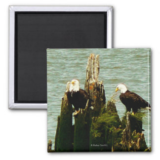 Pair of Eagles 2 Inch Square Magnet