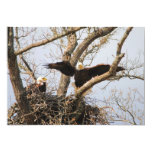 """Pair of Eagles at Nest 5"""" X 7"""" Invitation Card"""