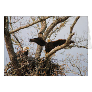 Pair of Eagles at Nest Card
