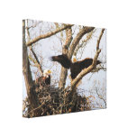 Pair of Eagles at Nest Gallery Wrapped Canvas