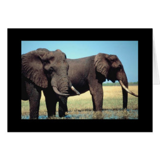 Pair of Elephants Card