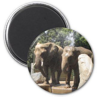Pair of Elephants Magnet Magnet