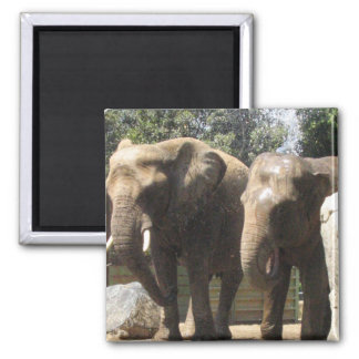 Pair of Elephants Square Magnet Magnet