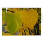 Pair of Fall Redbud Leaves Autumn Photography Card