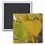 Pair of Fall Redbud Leaves Autumn Photography Magnet