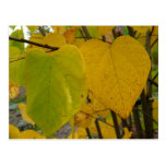 Pair of Fall Redbud Leaves Autumn Photography Postcard