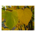 Pair of Fall Redbud Leaves Autumn Photography Poster