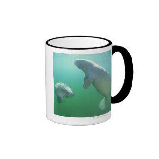 Pair of florida manatees swimming coffee mug