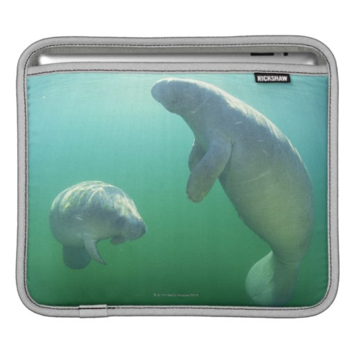 Pair of florida manatees swimming sleeves for iPads