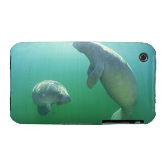 Pair of florida manatees swimming iPhone 3 case