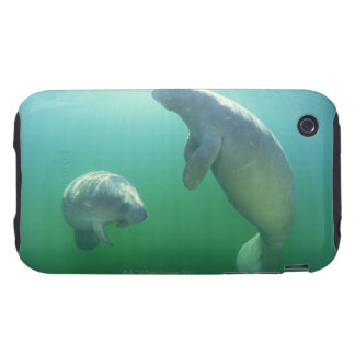 Pair of florida manatees swimming iPhone 3 tough case