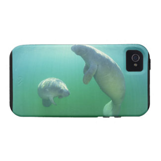 Pair of florida manatees swimming iPhone 4/4S covers