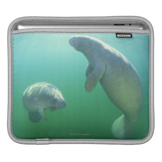 Pair of florida manatees swimming sleeve for iPads