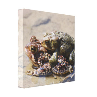 Pair of Frogs Canvas Print