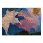 Pair of Frozen Fall Leaves Late Autumn Card