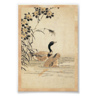 Pair of Geese with Camellias vintage japanese art Poster