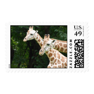 Pair of Giraffes Postage Stamp