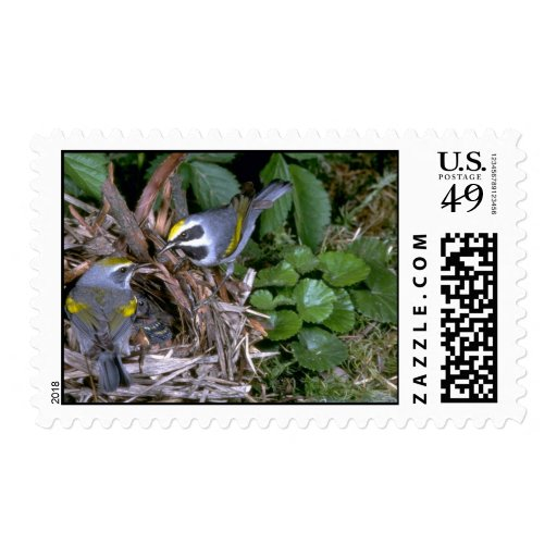 Pair of Golden-winged Warblers with nest Stamps