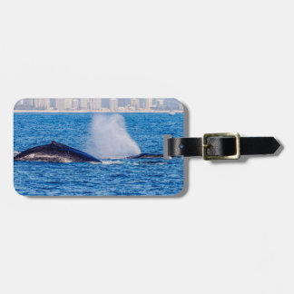 Pair of Humpback Whales Luggage Tag