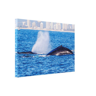 Pair of Humpback Whales Wrapped Canvas