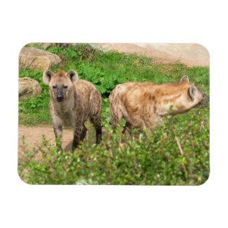 Pair of Hyenas Magnet