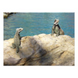 Pair of Iguanas Tropical Animal Photography Photo Print