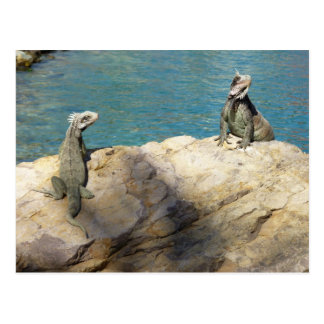 Pair of Iguanas Tropical Wildlife Photography Postcard