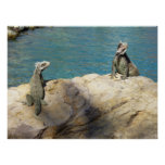 Pair of Iguanas Tropical Wildlife Photography Poster