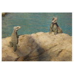Pair of Iguanas Tropical Wildlife Photography Wood Poster