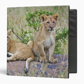 Pair of Lion cubs on rock, Panthera leo, Masai Vinyl Binder