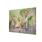 Pair of Lion cubs on rock, Panthera leo, Masai Canvas Print