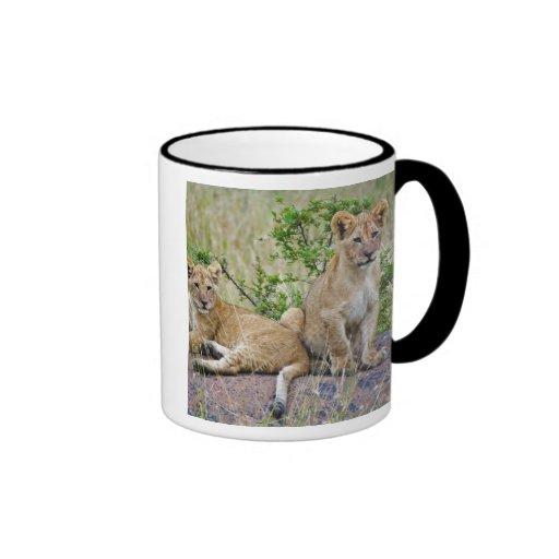 Pair of Lion cubs on rock, Panthera leo, Masai Coffee Mugs