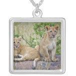 Pair of Lion cubs on rock, Panthera leo, Masai Pendant