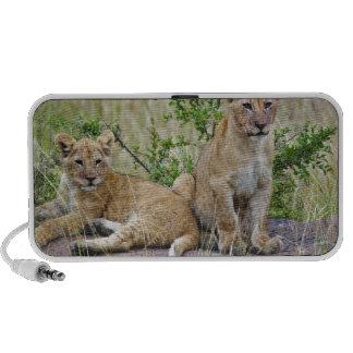 Pair of Lion cubs on rock, Panthera leo, Masai Travel Speaker