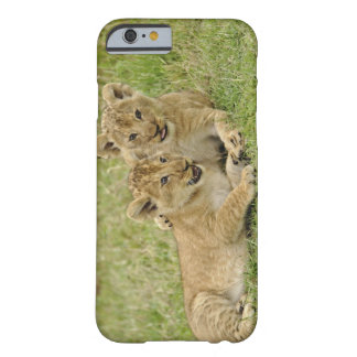 Pair of lion cubs playing, Masai Mara Game Barely There iPhone 6 Case