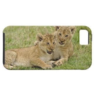 Pair of lion cubs playing, Masai Mara Game iPhone SE/5/5s Case