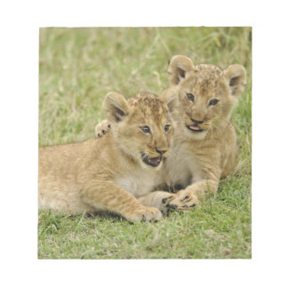 Pair of lion cubs playing, Masai Mara Game Notepad