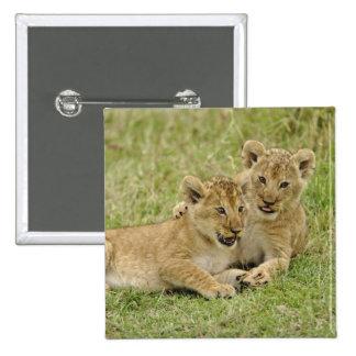 Pair of lion cubs playing, Masai Mara Game Pinback Button