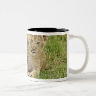Pair of lion cubs playing, Masai Mara Game Two-Tone Coffee Mug