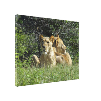 Pair Of Lions Canvas Print
