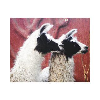 Pair of Llamas Canvas Print