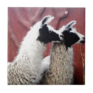 Pair of Llamas Tile
