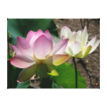 Pair of Lotus Flowers I Canvas Print