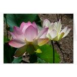 Pair of Lotus Flowers I Card