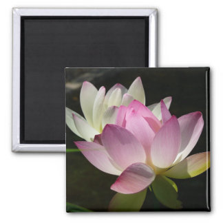 Pair of Lotus Flowers II 2 Inch Square Magnet