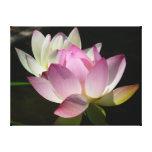 Pair of Lotus Flowers II Canvas Print