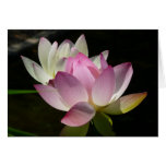 Pair of Lotus Flowers II Card
